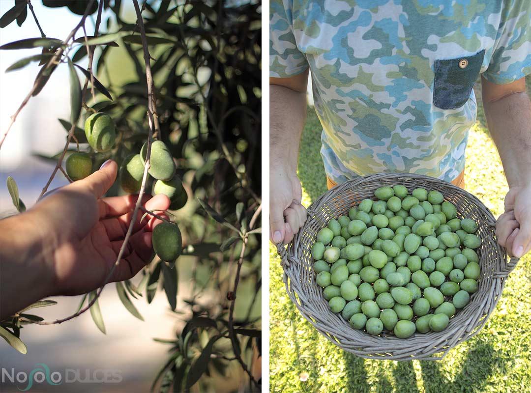 Aceitunas aliñadas estilo andaluz